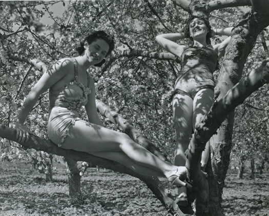 Caption: Climb a tree in heels? Washington State Archives, Digital Archives.
